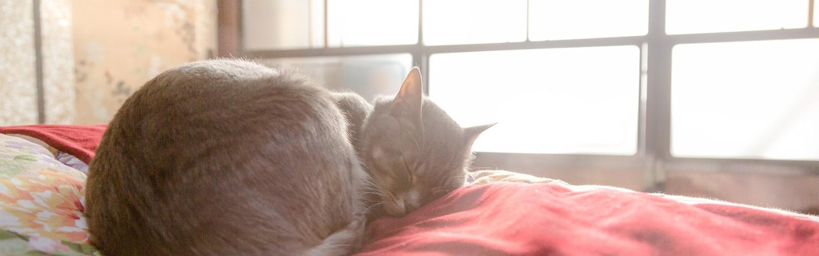コタツの上で日向ぼっこをしながら眠る猫